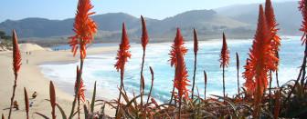 carmel_river_beach_m_meyer_monterey